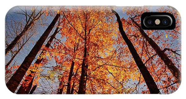Fall Trees Sky IPhone Case