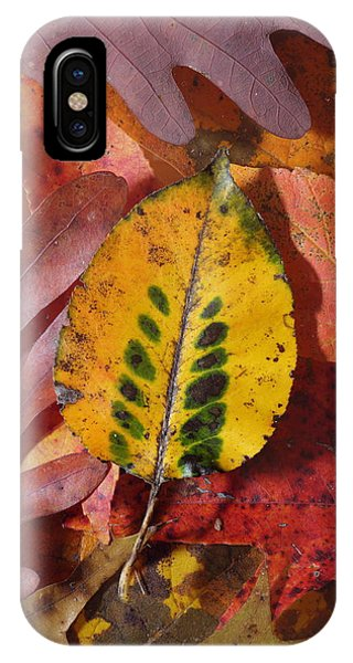IPhone Case featuring the photograph Fallen Leaves by Daniel Reed