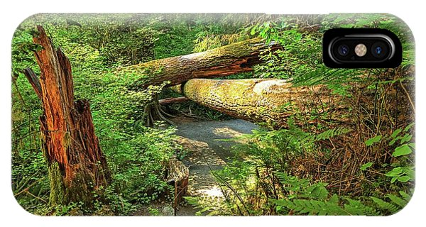 Fallen Trees In The Hoh Rain Forest IPhone Case