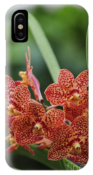 Family Of Orange Spotted Orchids IPhone Case