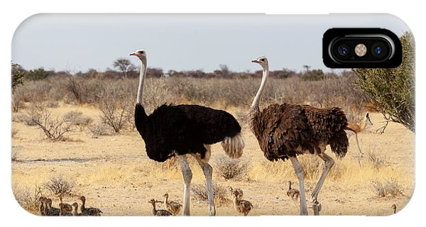 Zoology iPhone Case - Family Of Ostrich With Chicken by Artush