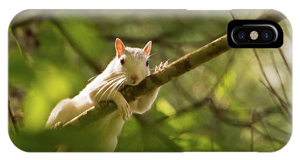 Famous Brevard White Squirrel IPhone Case
