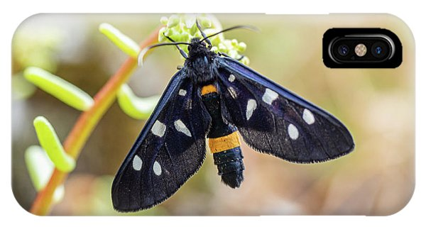 Fegea - Amata Phegea -black Insect With White Spots And Yellow Details IPhone Case