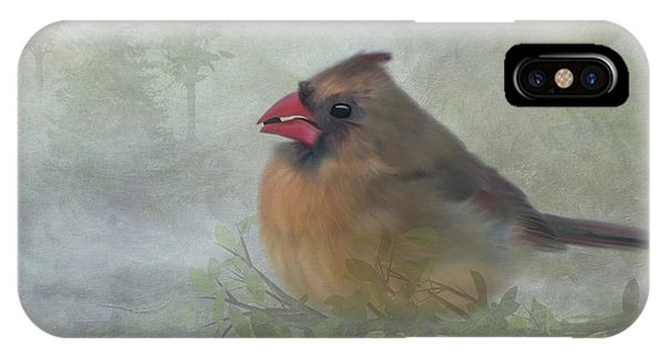 Female Cardinal With Seed IPhone Case