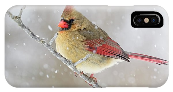 Female Northern Cardinal In Snow Phone Case by Adam Jones