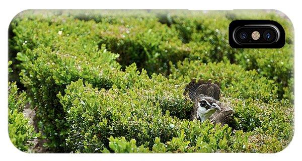 Female Peafowl Among The Bushes In Retiro Park, Madrid, Spain IPhone Case