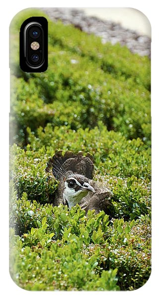 Female Peafowl Among The Bushes In Retiro Park, Madrid, Spain IPhone Case