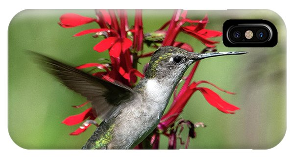 Female Ruby-throated Hummingbird Dsb0325 IPhone Case