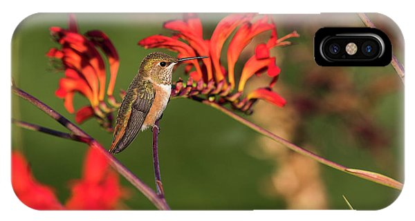 Female Rufous Hummingbird At Rest IPhone Case