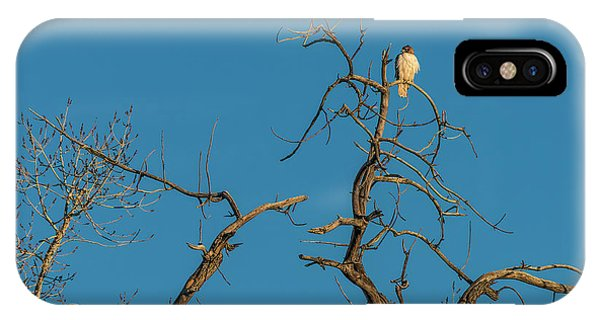 IPhone Case featuring the photograph Ferrunginous Hawk In Tree by Jon Burch Photography