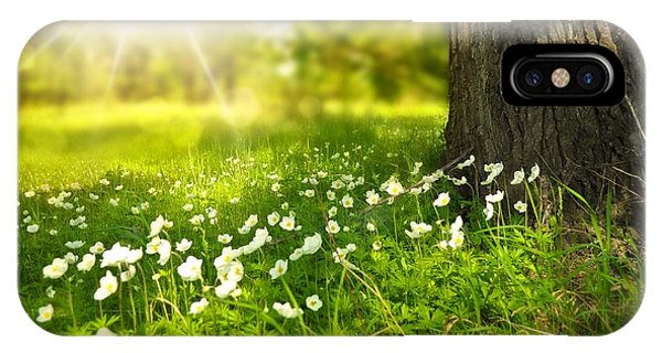 Field Of Daisies IPhone Case