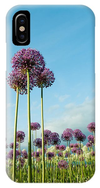 Botany iPhone Case - Field Of Purple Alliums Reaching Into by Denise Lett