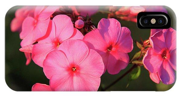 Flaming Pink Phlox IPhone Case