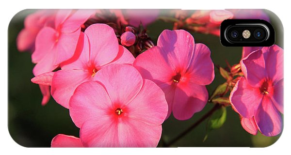 Flaming Pink Phlox IPhone Case