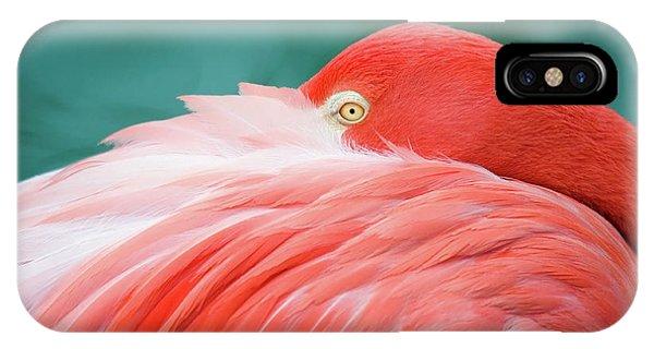Flamingo At Rest IPhone Case