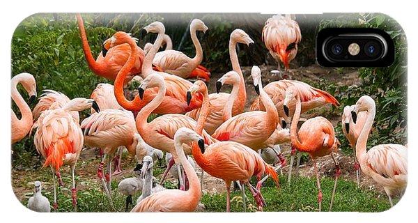 Flamingos Outdoors IPhone Case