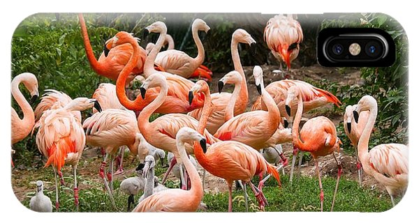 Flamingos Outdoors IPhone Case