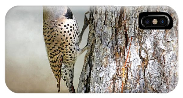 Northern Flicker iPhone Case - Flicker On A Pine by Donna Kennedy