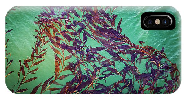 Floatin Kelp I Color IPhone Case