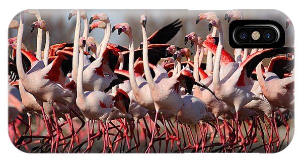 Great Lakes iPhone Case - Flock Of  Greater Flamingos by Ondrej Prosicky