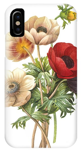 Botany iPhone Case - Flower Illustration by The Palms