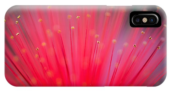 Horticulture iPhone Case - Flower Of Feather Duster Plant by Barbara Sullivan