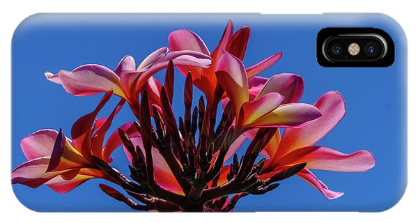 Flowers In Clear Blue Sky IPhone Case