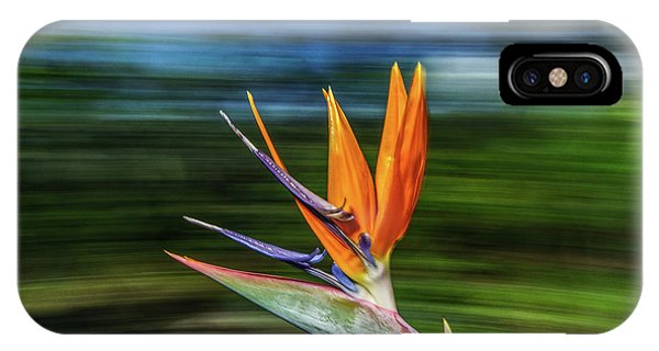 Flying Bird Of Paradise IPhone Case