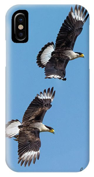 Flying Caracaras IPhone Case