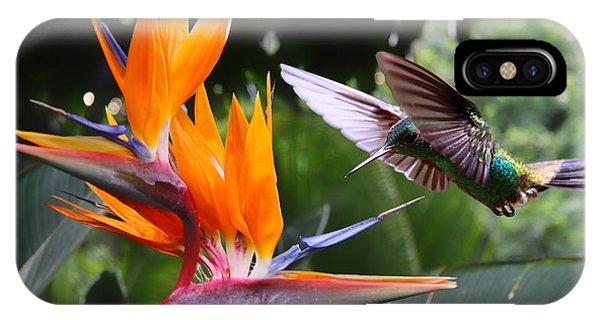 Hummingbirds iPhone Case - Flying Hummingbird At A Strelitzia by Henner Damke