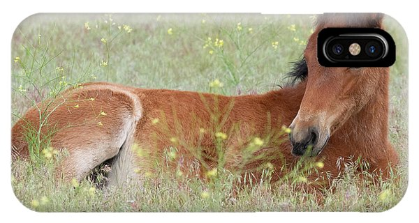 Foal In The Flowers IPhone Case