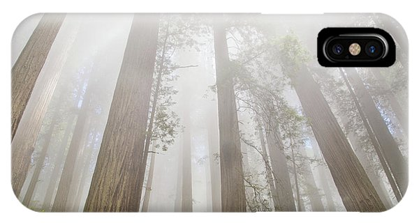 Fog In The Redwoods IPhone Case