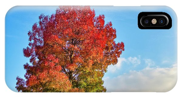 IPhone Case featuring the photograph Foliage In Flanders by Fabrizio Troiani