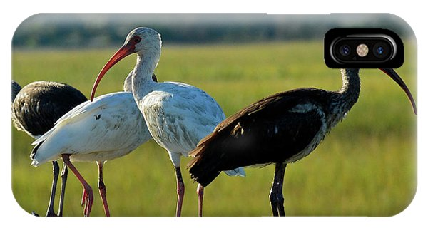 Four Ibises In A Row IPhone Case