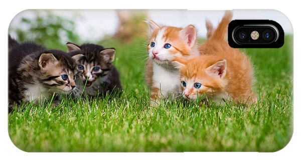 Tabby iPhone Case - Four Little Kittens Playing In Garden by Notaryes