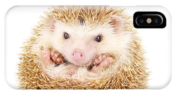 Spines iPhone Case - Four-toed Hedgehog, Atelerix by Kamonrat
