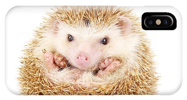 Adorable iPhone Case - Four-toed Hedgehog, Atelerix by Kamonrat