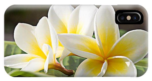 Blossom iPhone Case - Frangipani Tropical Flowers, Plumeria by Worawut2524