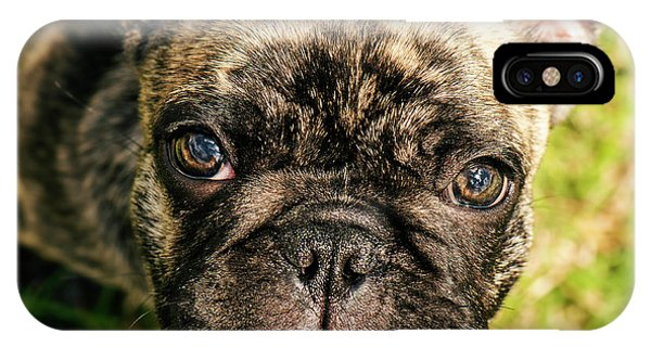 French Bull Dog iPhone Case - French Bull Dog by Rob D Imagery
