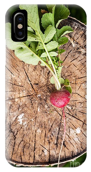 Small iPhone Case - Fresh Radish On The Birch Stumb by Naturephotography