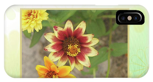 Friendship, A Smiling Indian Blanket Flower  IPhone Case