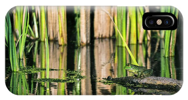 IPhone Case featuring the photograph Frog On A Log by Edward Peterson