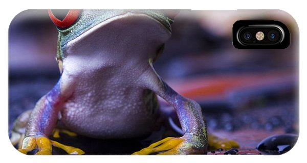 Tint iPhone Case - Frog by Sebastian Duda