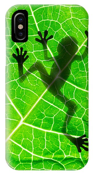 Botanical Garden iPhone Case - Frog Shadow On The Leaf by Patryk Kosmider