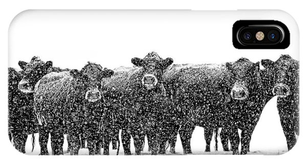 Frosty Faces Black Angus Cows Montana IPhone Case