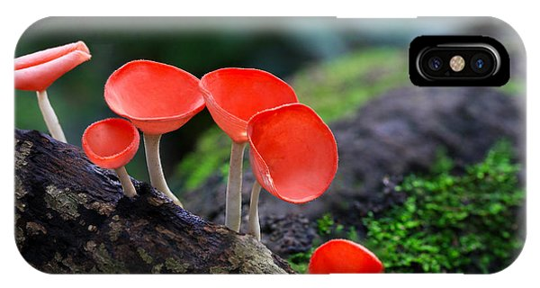 Primary Colors iPhone Case - Fungi Cup Red Mushroom Champagne Cup by Sanit Fuangnakhon