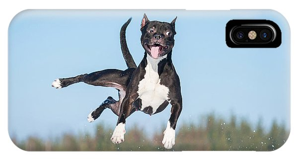 Eye Ball iPhone Case - Funny American Staffordshire Terrier by Grigorita Ko