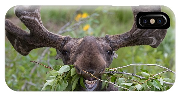 Eating iPhone Case - Funny Awkward Moose Eating Branches by Green Mountain Exposure