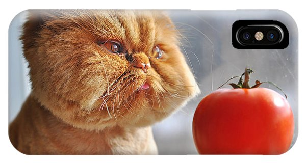 Eating iPhone Case - Funny Cat And Red Tomato by Zanna Pesnina