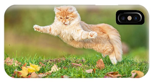 Tabby iPhone Case - Funny Cat Flying In The Air In Autumn by Grigorita Ko